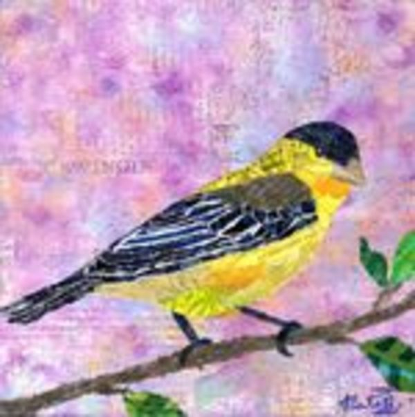 Backyard Birds: Mr. Lesser Goldfinch by Natasha Papousek