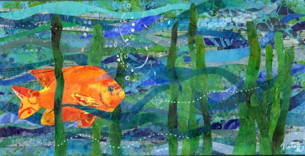 California Poppyfish by Natasha Papousek