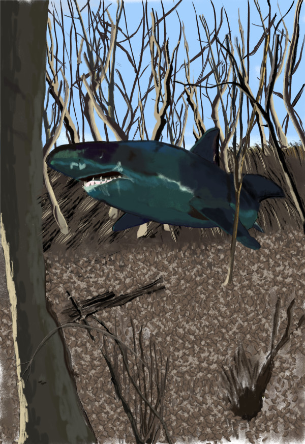 Forest Shark 18 x 24 only by matthew stitt