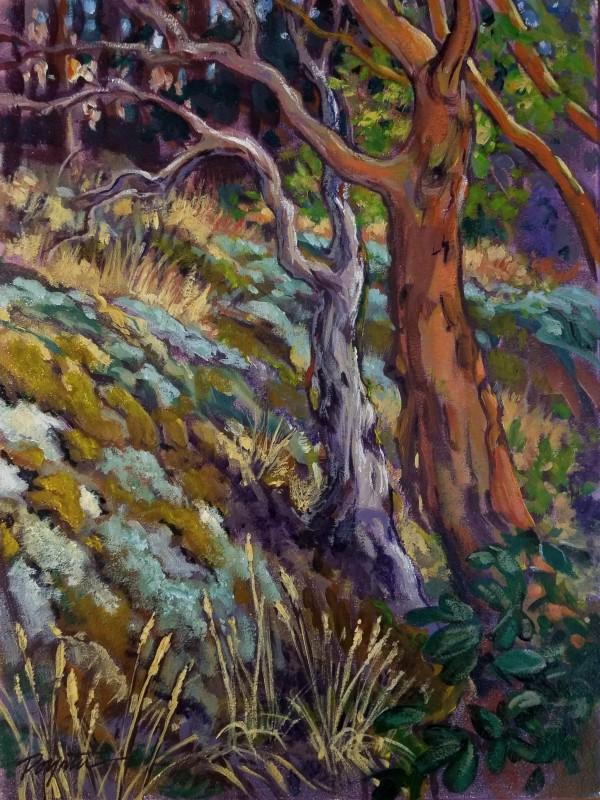 """Arbutus Moss #2 Cypress Mt""  (I'm lichen it ;-) by Jan Poynter"