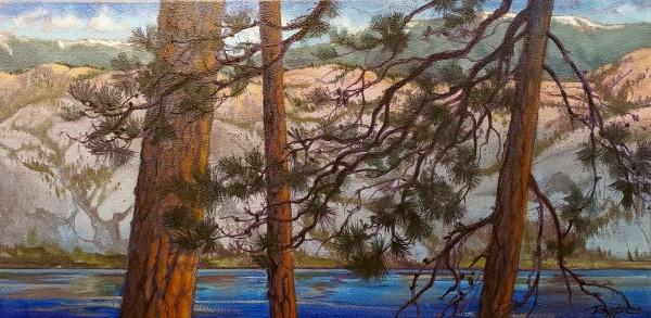 Okanagan lights Pine#1 by Jan Poynter
