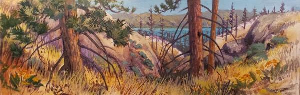 Gully pine 1 by Jan Poynter