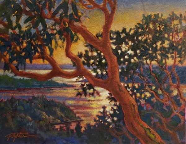 Arbutus overlook - Island  Sunset by Jan Poynter