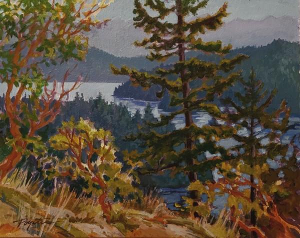 cedar lights - howe sound by Jan Poynter