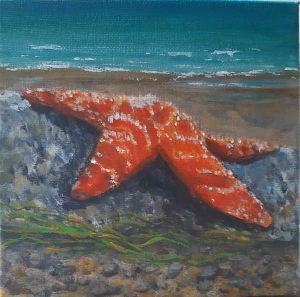 Lone Star by Bonnie Schnitter