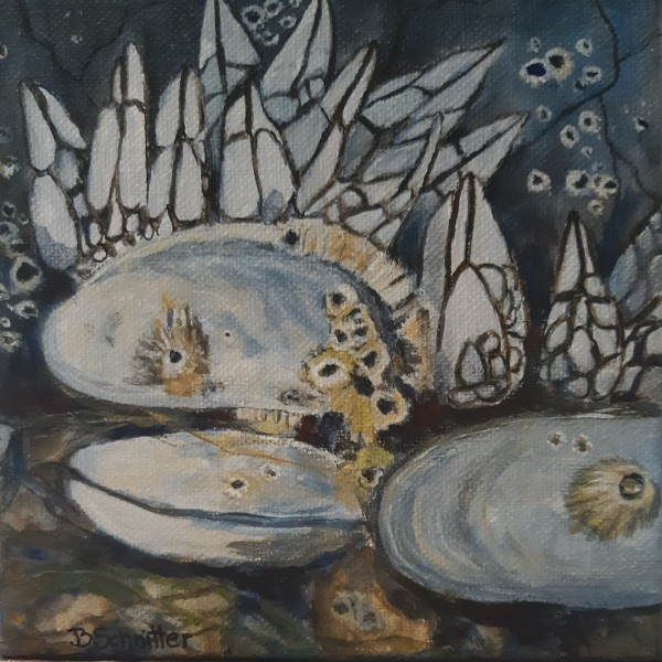 Oyster Barnacles by Bonnie Schnitter