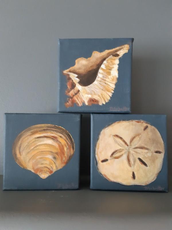 Shells by Bonnie Schnitter