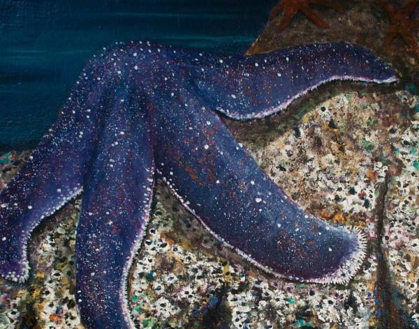 purple star by Bonnie Schnitter