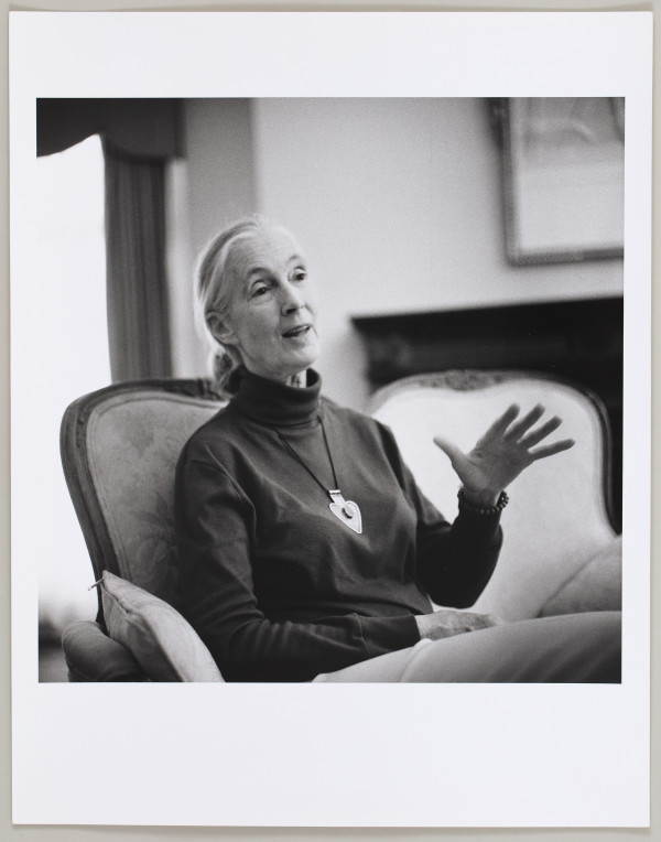 Jane Goodall by Matthew Septimus