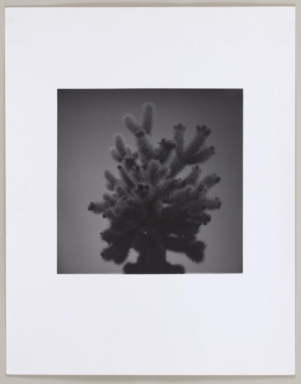 Joshua Tree, California by Matthew Septimus