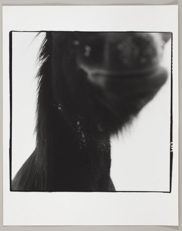 Hest, Askoy, Norway by Matthew Septimus