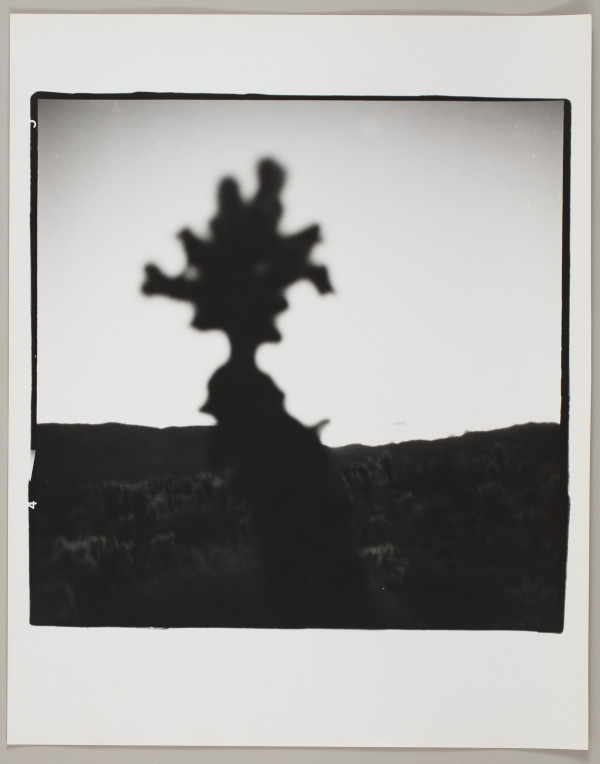 Joshua Tree, California by Matthew Septimus