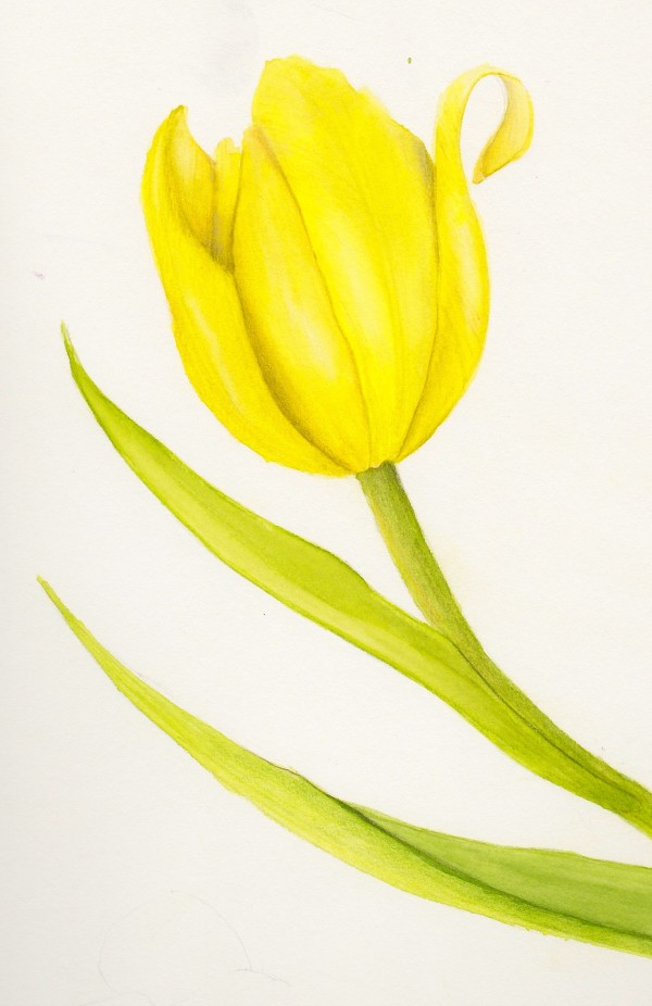 Yellow Tulip - 4pack Notecards by Lisa Libretto
