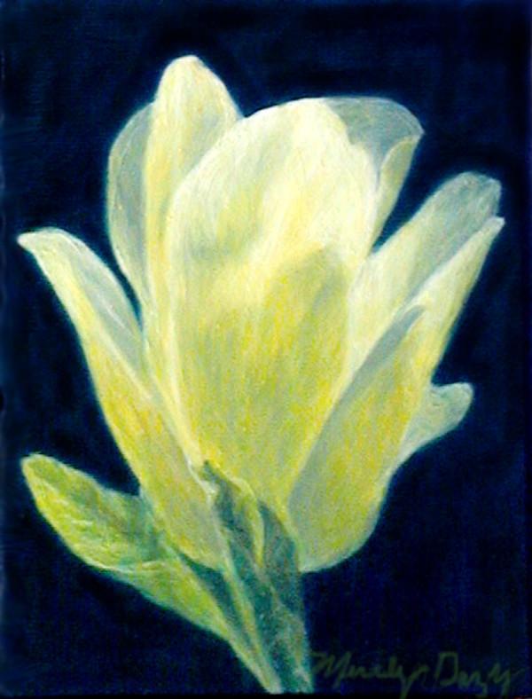 White Magnolia by Merrilyn Duzy