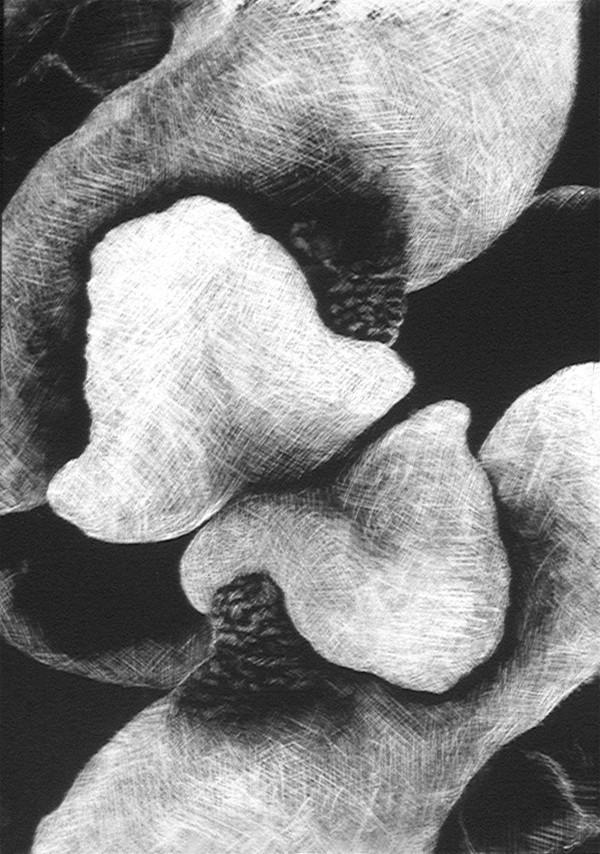 White Reflection & Untitled (twist) by Merrilyn Duzy