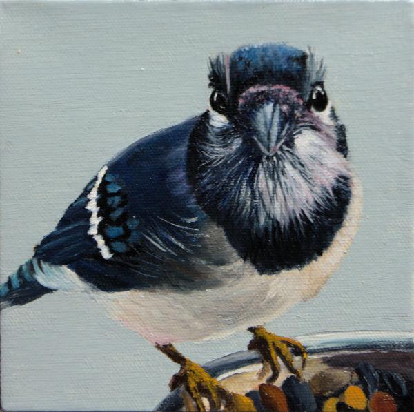 Bird Cam Blue Jay by Brenda Francis
