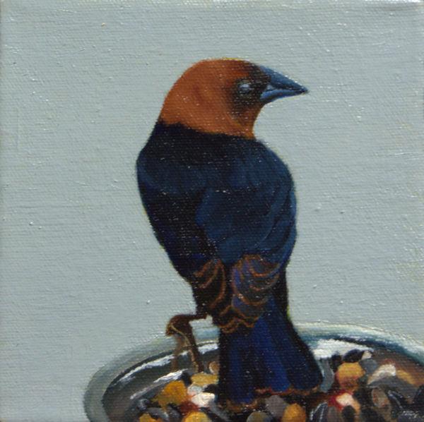 BIRD CAM BROWN HEADED COWBIRD by Brenda Francis