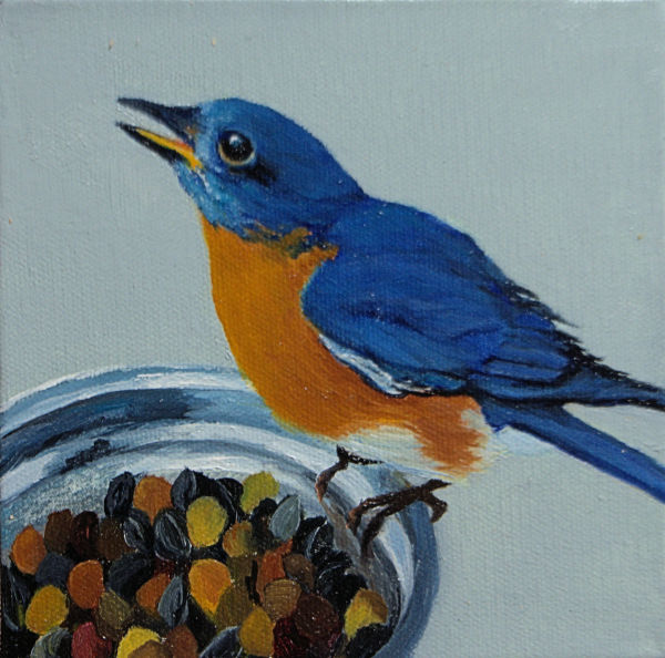 Bird Cam Mr. Bluebird by Brenda Francis