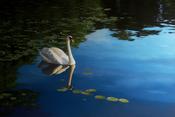 Swan in Last Light by Paul Beckingham