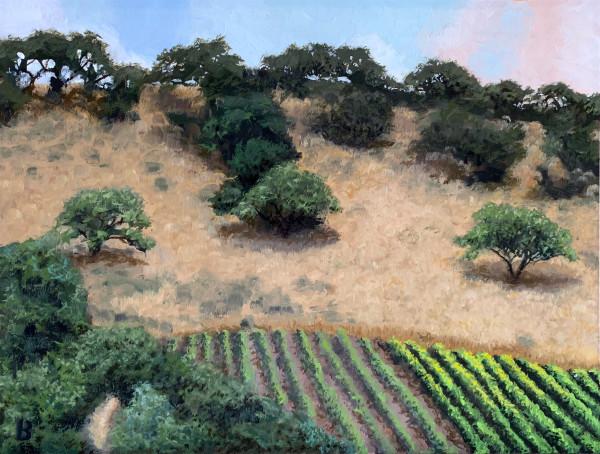 Solvang Vineyard by Paul Beckingham
