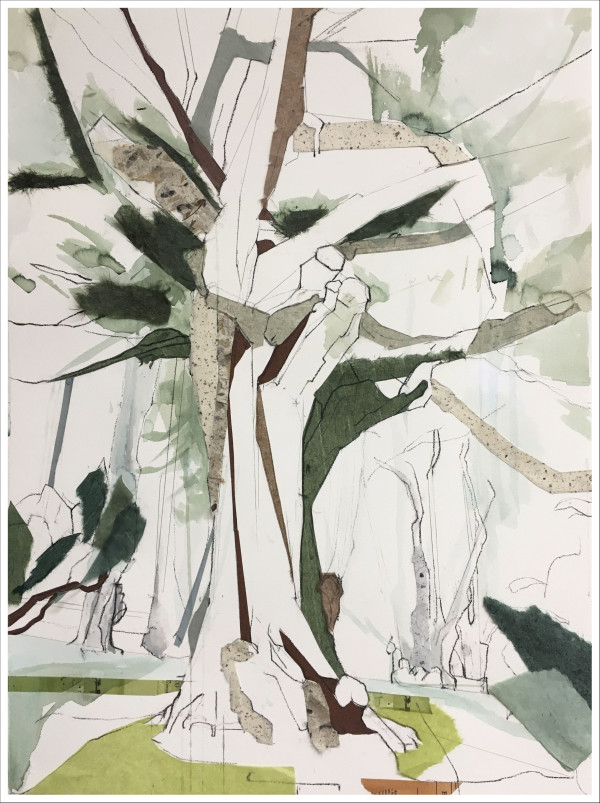 Carmel Eucalyptus II (The Embrace) (Framed) by Jill Lear