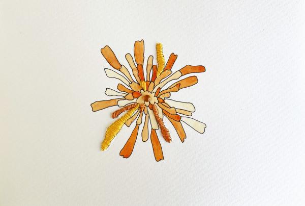 Orange Agoseris II by Jill Lear