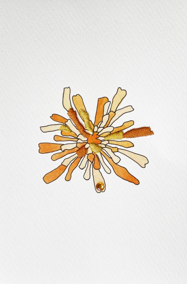 Orange Agoseris I by Jill Lear