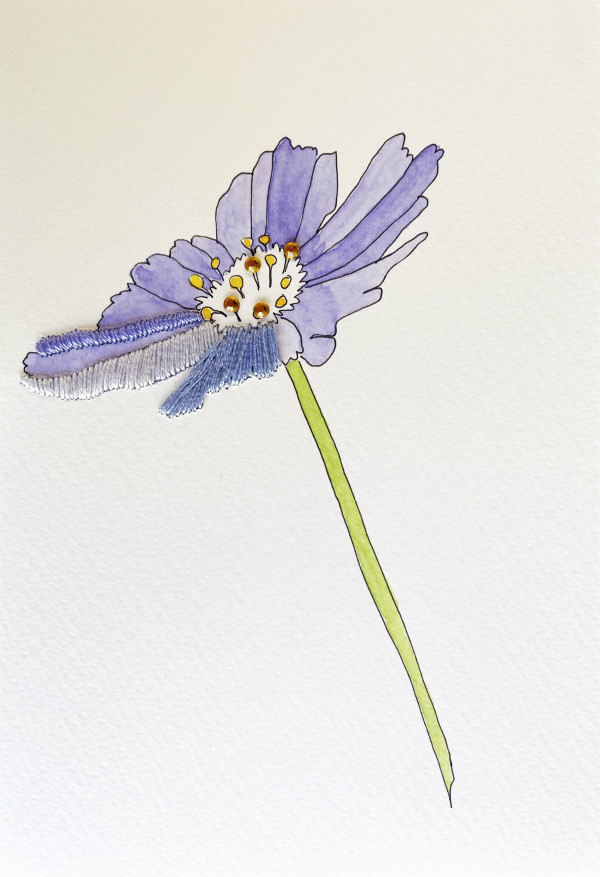 Periwinkle Cosmos I by Jill Lear