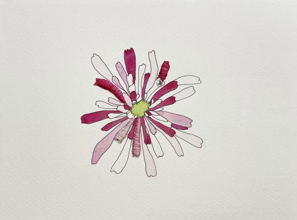 Pink Agoseris I by Jill Lear