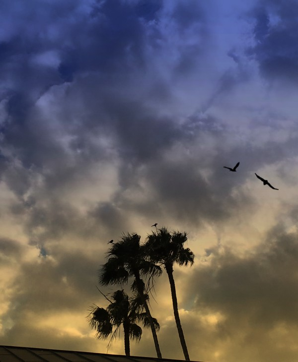 Birds & Palms by Kathie Collinson