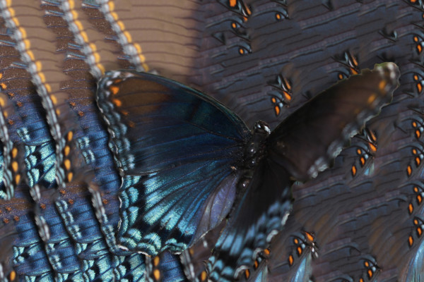 Fairy Wings by Y. Hope Osborn