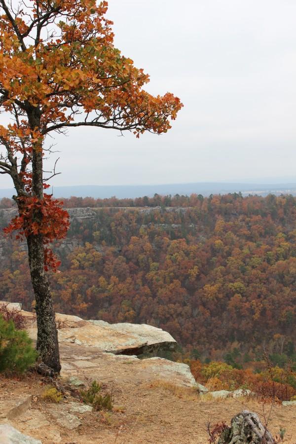 Fall Away by Y. Hope Osborn