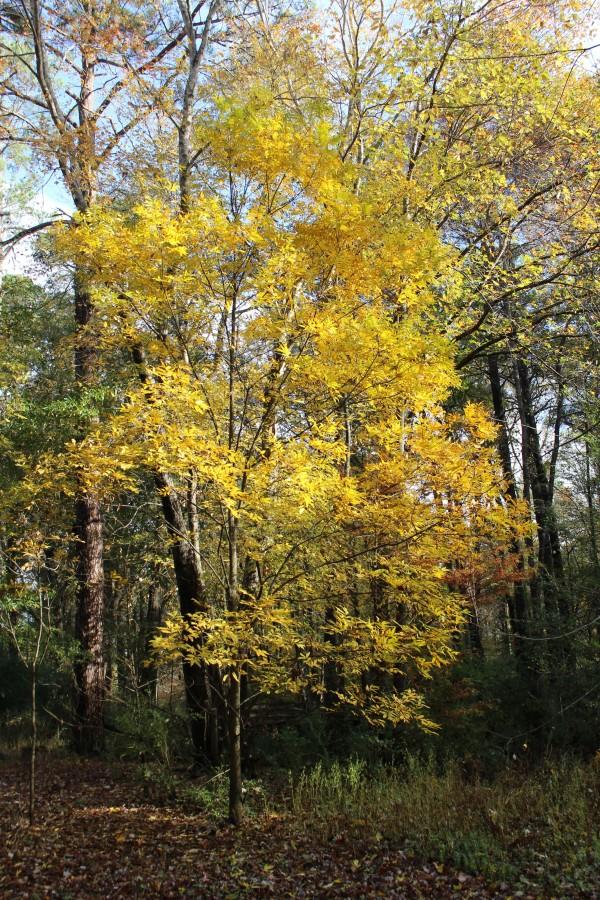Autumn Gold by Y. Hope Osborn