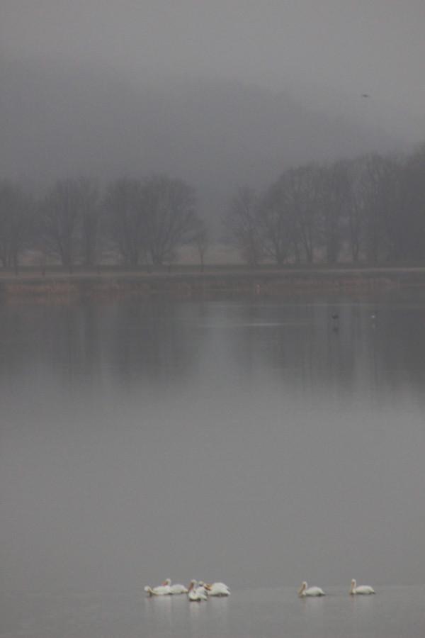 Mystic Morning 2 by Y. Hope Osborn