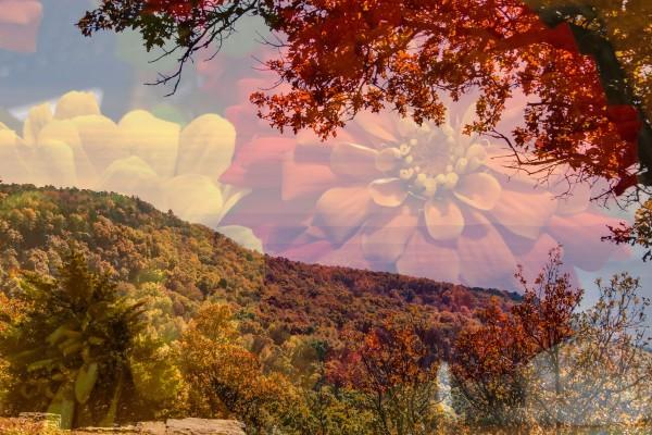 Summer Falls by Y. Hope Osborn