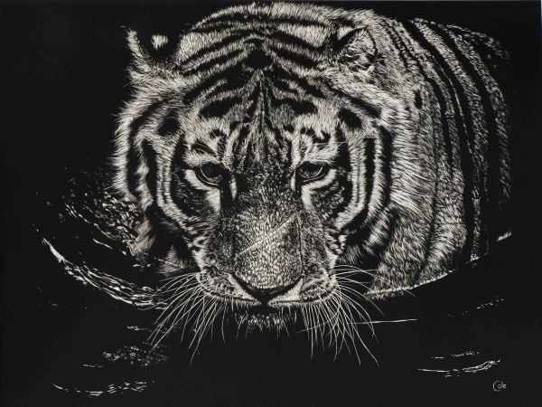 The Tiger Swims at Night by Nathan Cole