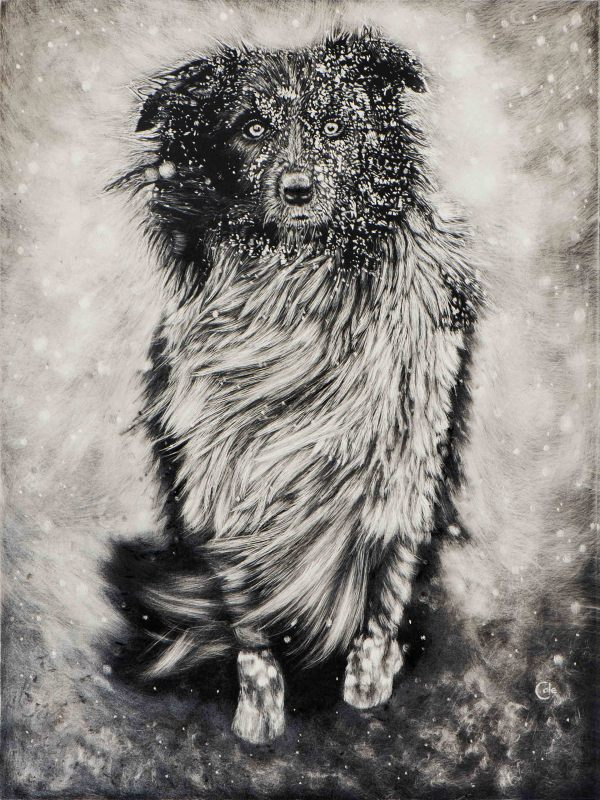 Dog in Winter by Nathan Cole