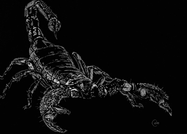 O, Full of Scorpions is my Mind by Nathan Cole