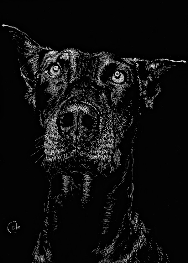 The Curious Expressions of Dogs by Nathan Cole