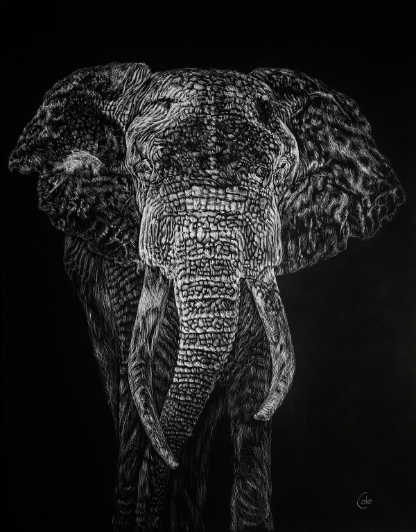 The Elephant Shakes the Earth by Nathan Cole