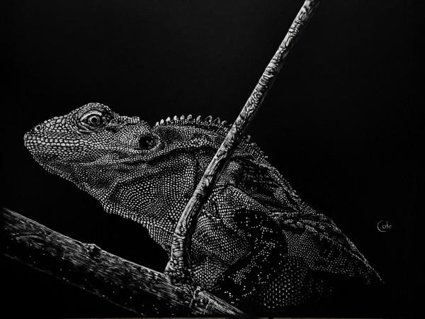 Creeping Iguana by Nathan Cole