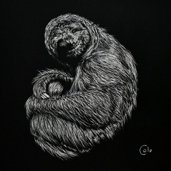 Friendly Sloth by Nathan Cole