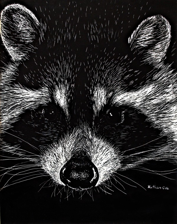 The Curious Raccoon by Nathan Cole