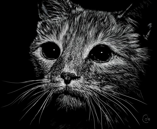 Wide-Eyed Cat by Nathan Cole
