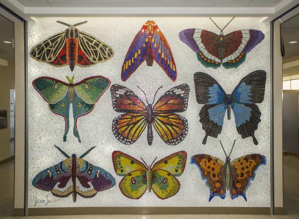 Minnesota Lepidoptera by Josie Lewis