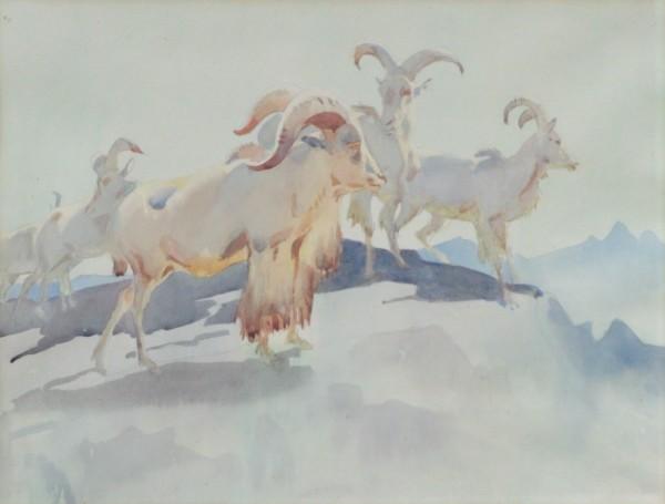 Barbary Sheep by Dorthy Adamson