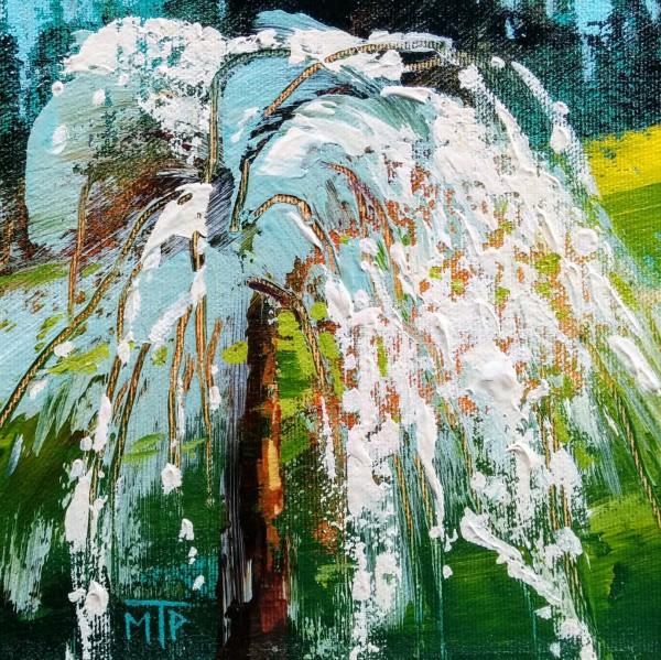 Weeping Cherry Tree Study by Tatjana Mirkov-Popovicki