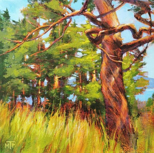 Old Jack Pine by Tatjana Mirkov-Popovicki