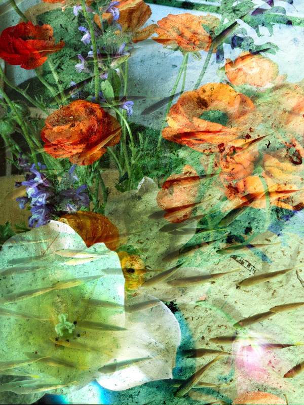 Hallucinations Flowers and Fish by Bonnie Levinson
