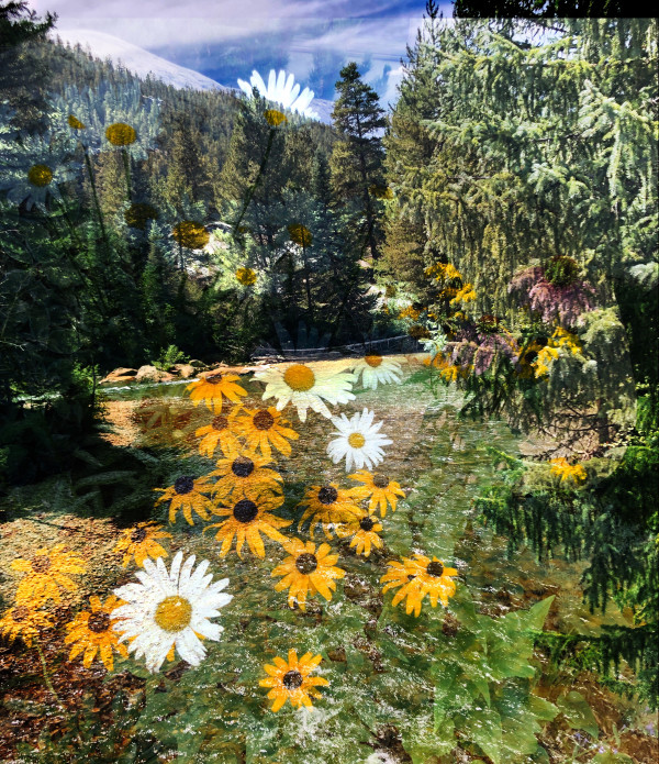 Rushing Waters and Wildflowers in Aspen 2 by Bonnie Levinson